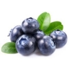 China Blueberry Extract for sale