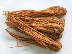 Quality Angelica Extract,angelica herb,dong quai extract,dong quai, for sale