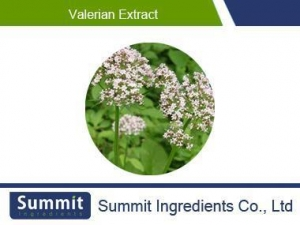 China valerian root extract, 0.8% valerenic acid,Valeriana officinalisL on sale