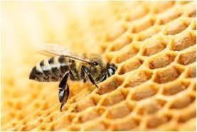 China Agriculture Apiculture - Global Market Outlook (2015-2022) on sale