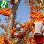 China Rosehip Oil Essential Oil on sale