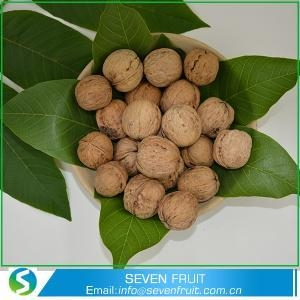 China Exporters Quality Raw Walnuts In Shell For Wholesale on sale