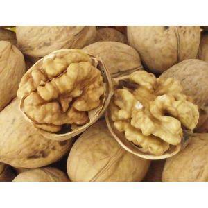 China Competitive Chinese walnut shell on sale