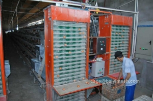 China Automatic Poultry Equipment Egg Collection System on sale