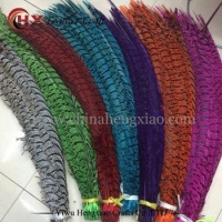 Factory wholesale Dyed colorful ZEBRA Lady Amherst pheasant tail feathers for sale