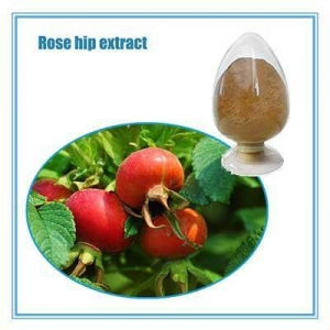 China Rose hip powder 100% Pure Rose Hip Oil/ Rose Essential Oil on sale