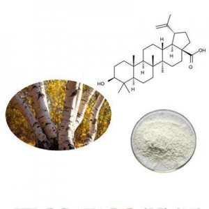 China Favorable price best quality Birch bark extract in bulk supply on sale