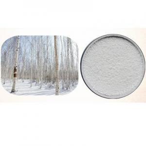 China White Birch Extract natural tree plant Betula platyphylla Suk extract Betulinic Acid powder on sale