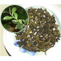 China Oolong Tea Ever-Spring Tea on sale