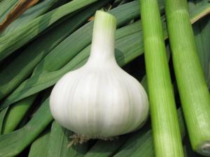 China Fresh White Garlic - (organic , Spicy And Health) on sale