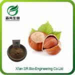 Pure Hazelnut Extract, Top Quality Hazelnut Powder, Wholesale Organic Hazelnut Extract