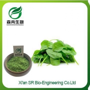China Organic Spinach Powder, Pure Natural Spinach Powder, Factory Supply Spinach Extract on sale