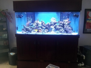 China Hanging Fish Tank on sale