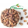 China Pine Nuts Kernels Chinese Seed Dry Organic Natural Jumbo Size Whole In Shell Baking Material for sale