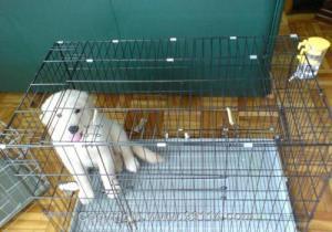 China Breeding cage on sale