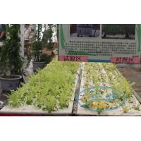 Micro nano bubble aerobic drip irrigation system