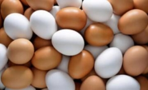 China High Fresh Table Eggs Brown And White on sale