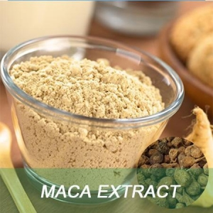 China Maca Extract Men health herbs food supplement raw material maca root powder on sale