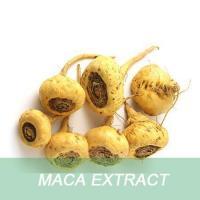 Top Quality 100% Natural Maca Powder, Maca extract, 10:1 Maca root Powder