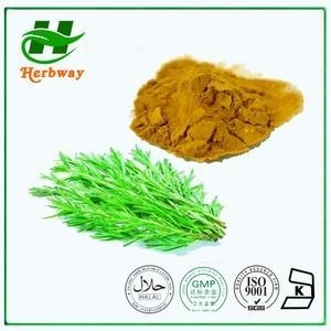 China Rosemary Herb Extract on sale