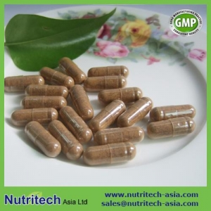 China Maitake Mushroom Extract Capsules on sale