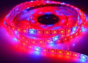 China LED Plant Grow Lights 5050 LED Strip DC12V Red Blue 5:1 for Greenhouse Hydroponic Plant Growing on sale