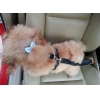 China Pet seat belts Model:C004 for sale