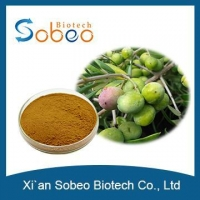China Olive Tree Leaf Extract Oleuropein Hydroxytyrosol Powder 20%-98% HPLC for sale on sale