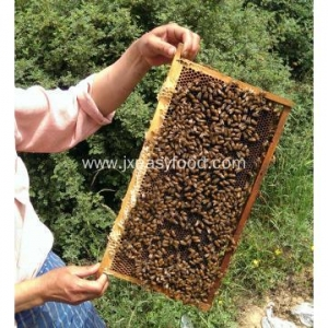 China 2017 100% pure natural raw bee honey on sale