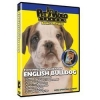 China Dogs English Bulldog - Everything You Should Know: Wholesale Products for sale