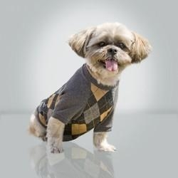 China Dogs Argyle Top: Wholesale Products on sale