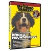 China Dogs Bernese Mountain Dog - Everything You Should Know: Wholesale Products for sale