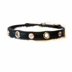 China Dogs Sophia Small Dog Collar: Wholesale Products on sale