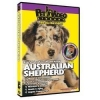 China Dogs Australian Shepherd - Everything You Should Know: Wholesale Products for sale