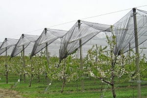 China Agriculture netting on sale