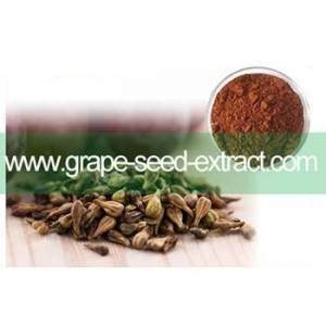 China Hot sale 100% natural Grape Seed extract with high quality&OEM available on sale