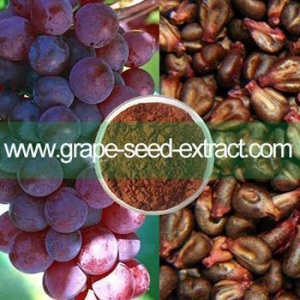 China natural herb organic grape seed extract powder on sale