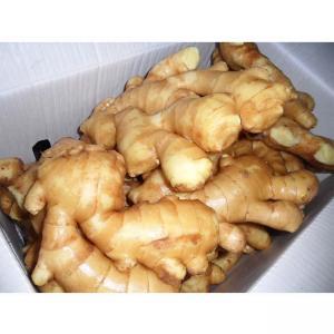 China Ginger Fresh Ginger Packing 10 Kg Box on sale
