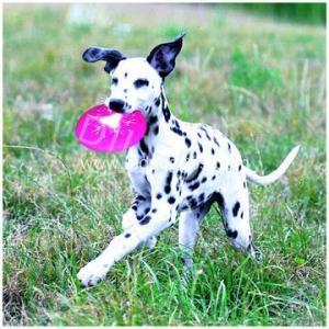 China LED Dog Frisbee Led Lighted Dog Frisbee Flying Disc Dog Toy on sale