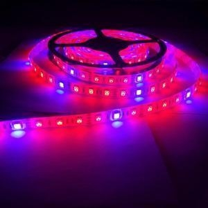 China Plant Grow lights Full Spectrum LED Strip on sale