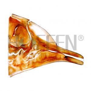 China Plastinated Specimens marine animals on sale