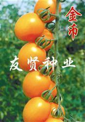 China Yellow Cherry Tomato Seed on sale
