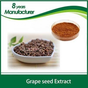 China Plant extract bulk Grape Seed Dry Extract Proantho Cyanidins 95% on sale