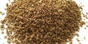China Carom Seed on sale