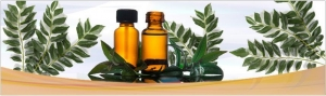 China Essential Oils ( A - C ) Curry Leaf Oil on sale