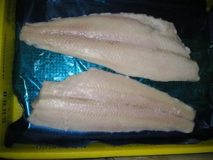China Saithe Fillet on sale