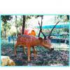 China Animatronic animal Animatronic life size Sika Deer model for sale for sale