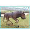 China Animatronic animal Moving Animatronic Wildebeest model for park for sale