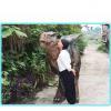 China Dinosaur costume walking animatronic dinosaur clothing for adults for sale