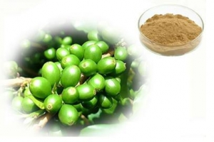 China Green Bean Extract Chlorogenic Acid on sale